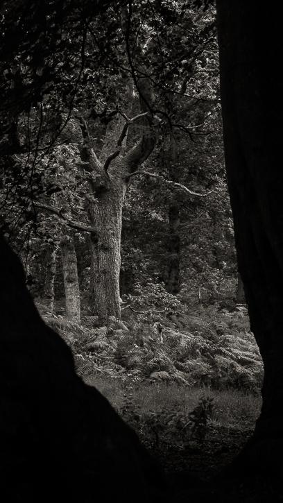 Kinclaven wood 2 © George Logan