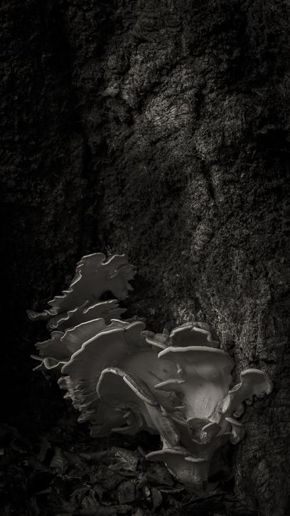 Kinclaven wood 4 © George Logan