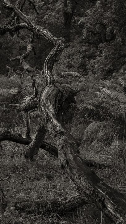 Kinclaven wood 1 © George Logan