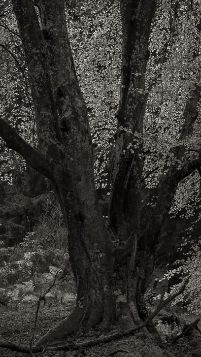 Kinclaven wood 3 © George Logan