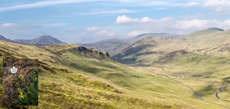 glenshee hills © George Logan