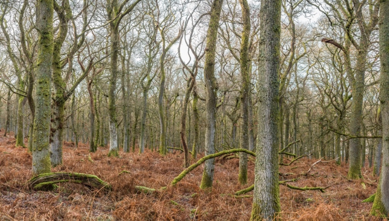 kinclaven bluebell wood © george logan 2018